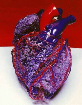 map-of-the-human-heart